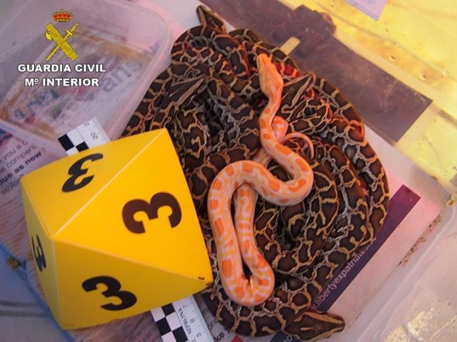 La Guardia Civil desmantela una organización internacional dedicada al comercio ilegal de especies protegidas