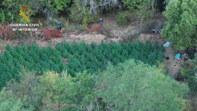 Encuentran 4.600 kilos de marihuana en el Parque Natural de la Sierra de Norte de Guadalajara