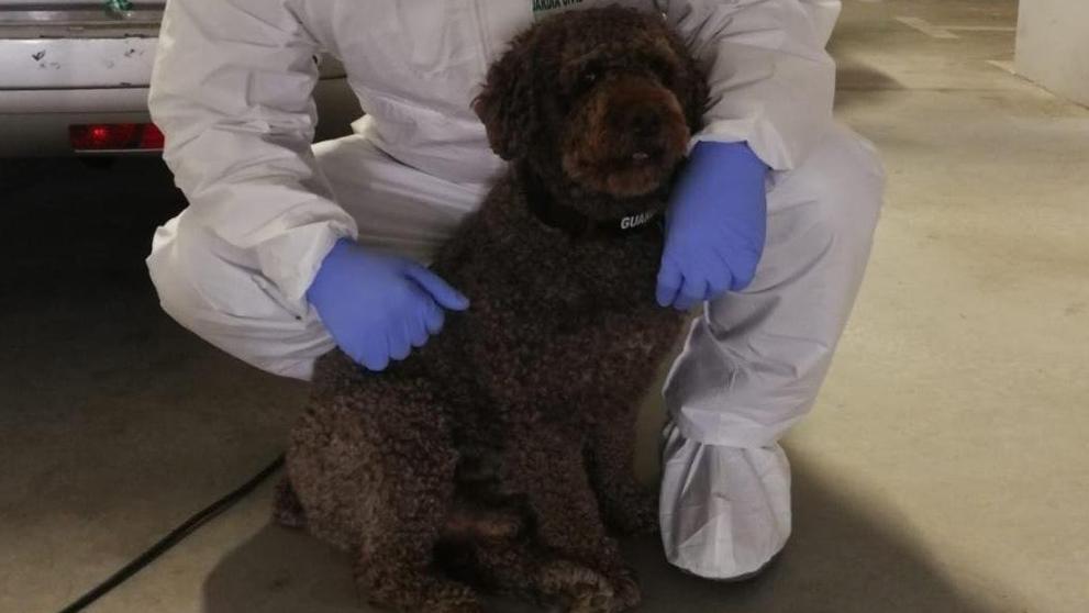 Nos deja Marley, el perro Guardia Civil que ayudó a encontrar los cuerpos de Diana Quer y de Gabriel