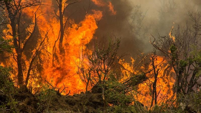 Detenido el presunto autor del incendio forestal del Parque Nacional del Guadarrama del verano pasado