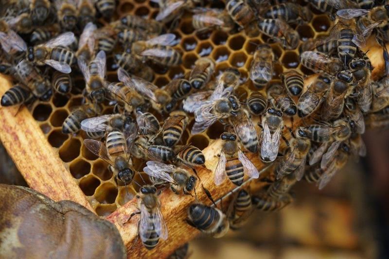 ¿Tienes abejas en casa? Descubre cómo actuar si encuentras una colmena
