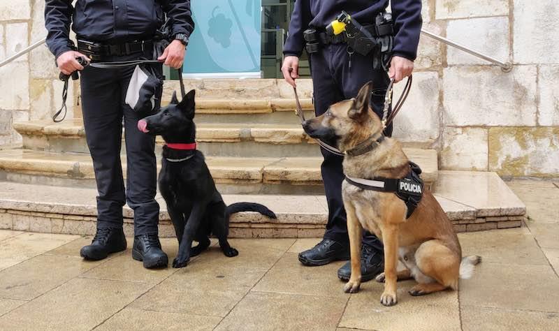 Estos son los dos perros de la unidad canina de la Policía Local de Vinaròs para la detección de drogas