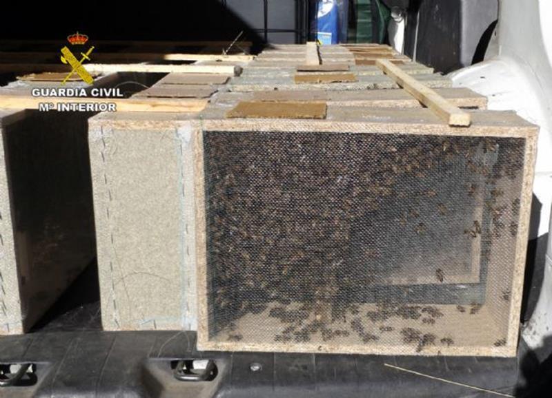 Detenido un hombre en Caravaca por robar abejas