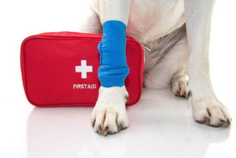 Primeros auxilios de supervivencia para salvarle la vida a nuestro perro