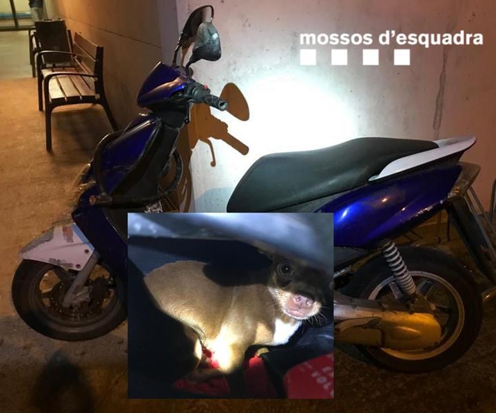 Denunciado por meter a su perro dentro del asiento de la moto
