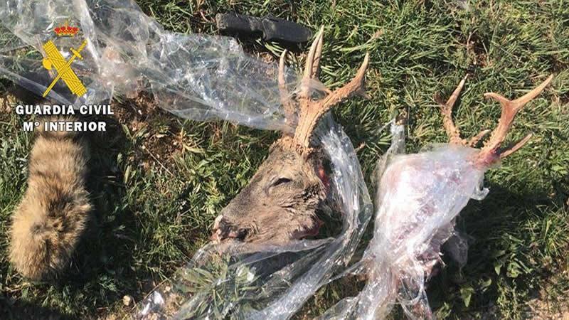 Detenidos in fraganti dos cazadores furtivos en Burgos