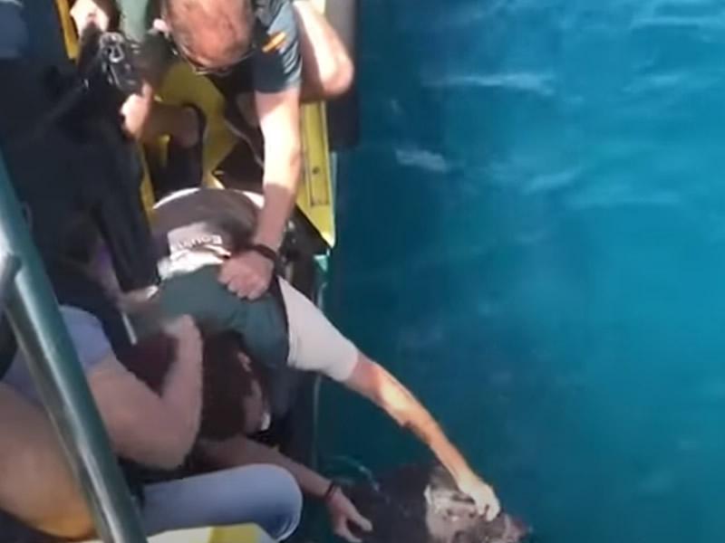 La tortuga Paqui vuelve al agua acompañada de la Guardia Civil