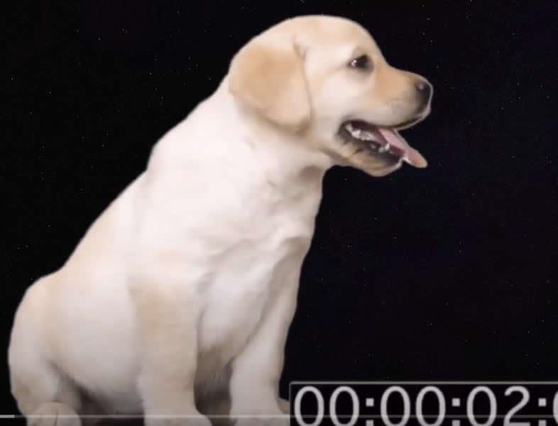La torsión gástrica en perros: cómo evitarla y por qué se produce