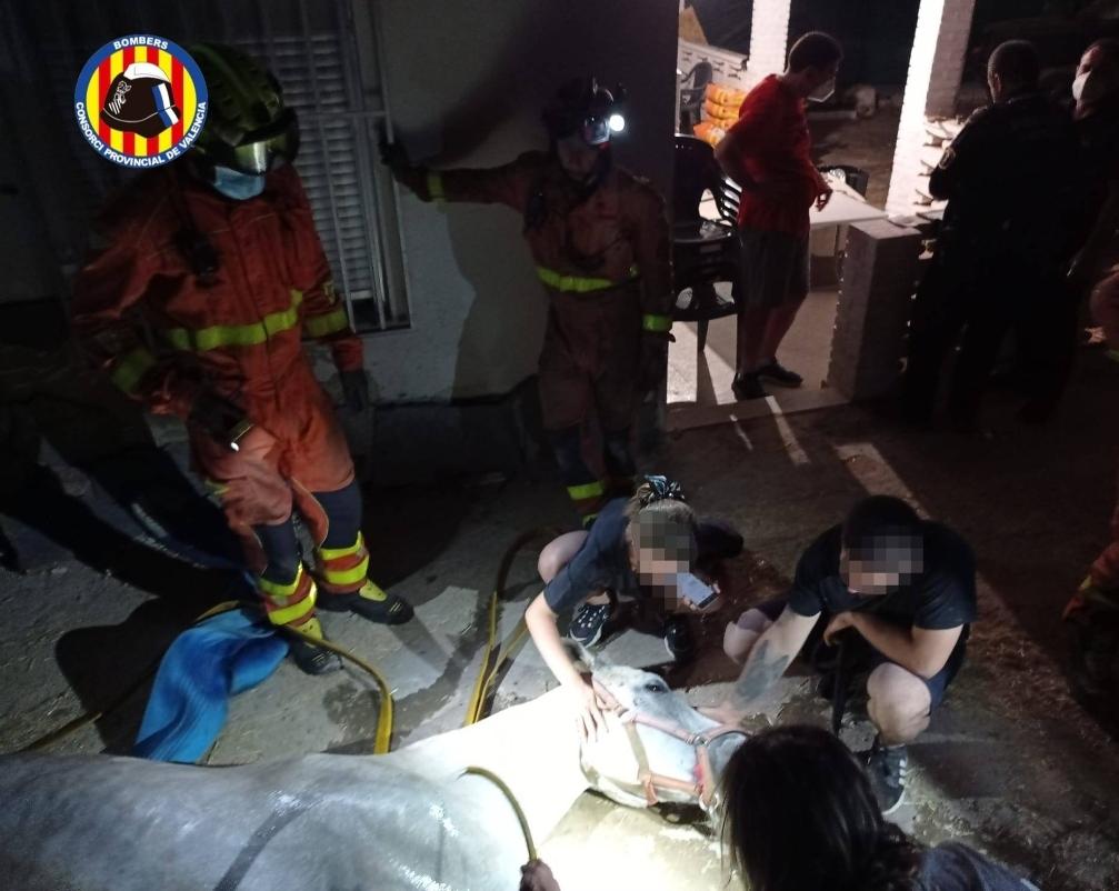 Rescatan a un caballo tras caer a un pozo en Montserrat (Valencia)